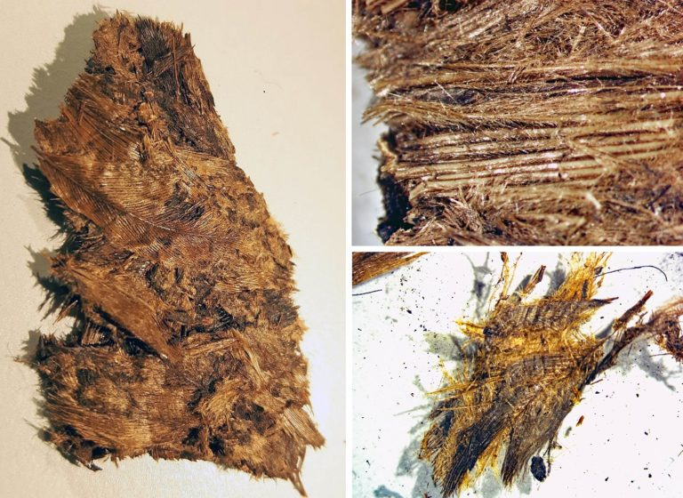 Detailaufnahme der Federn, die als Daunen in der Bettwäsche verwendet wurden. Die Federn sind sehr gut erhalten und ihre einzelnen Bestandteile gut zu erkennen.