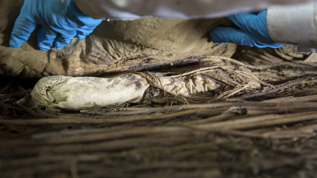 Ein Wissenschaftler entnimmt das Bündel aus weißem Stoff, in dem der Fötus eingewickelt worden war, aus dem Sarg. Das Bündel lag unterhalb der Matratze auf einer Unterlage aus Ästen.