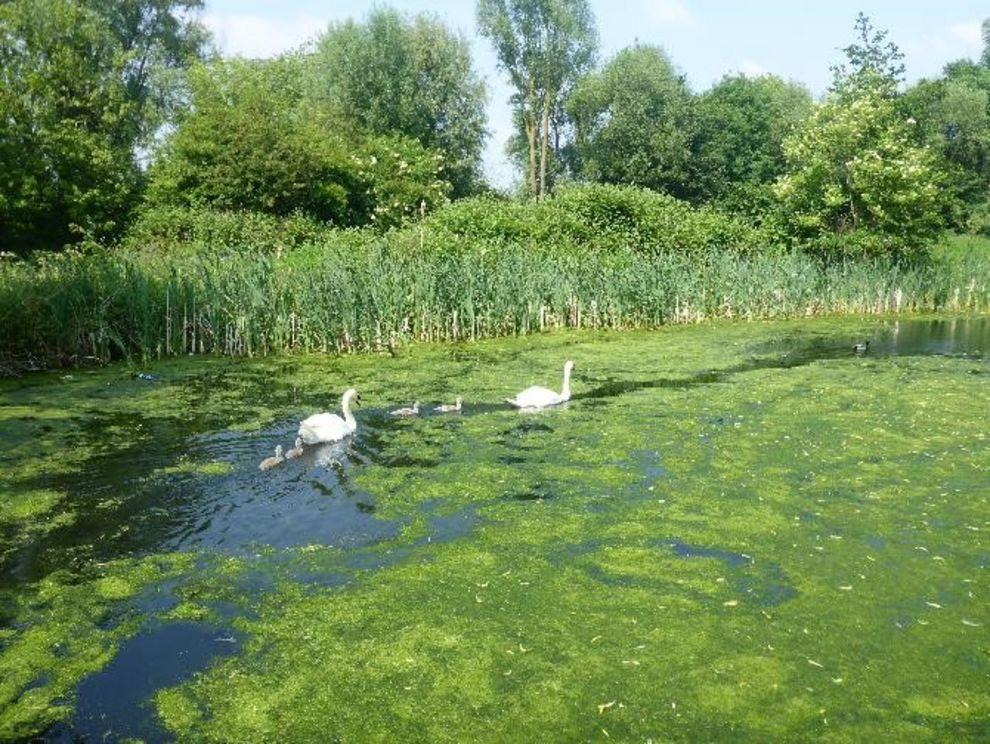 Biodiversität als Themenfeld innerhalb der Forschung zur Fluvialen Anthroposphäre: Flora und Fauna im Bereich eines mittelalterlichen Kanals in Großbritannien. Auenlandschaft,