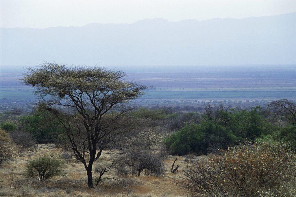 Trockene Savannenlandschaft in der Nähe des Chew Bahir, dessen Sedimentablagerungen eine Klimarekonstruktion ermöglichte.