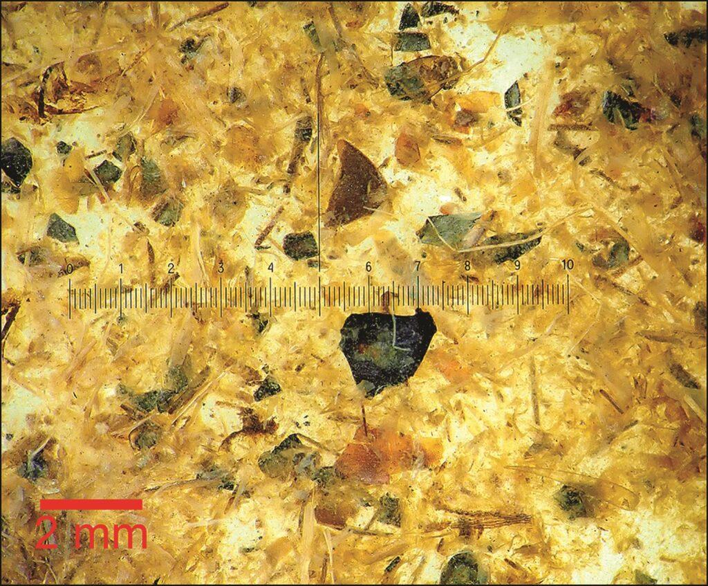 Die Aufnahme zeigt die Reste des Darminhalts des Tollund-Manns. Zu sehen sind winzige Bestandteile u.a. von Körnern und Getreide.