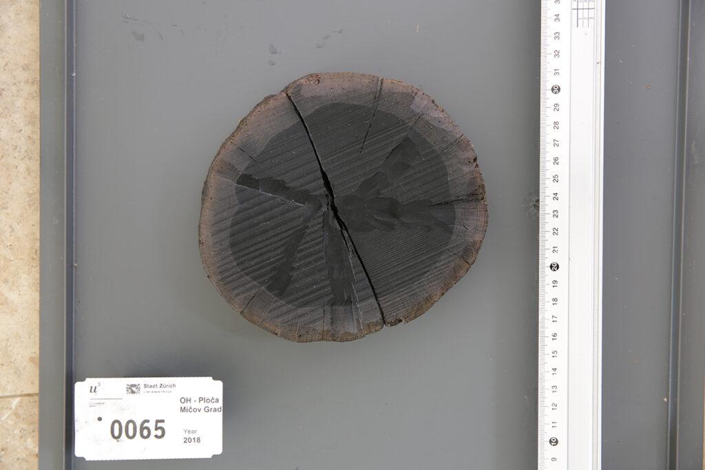 Detail einer Holzprobe.